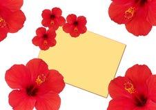 Floresce o hibiscus ao redor de um cartão Foto de Stock Royalty Free