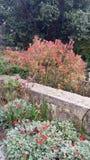Floresce o jardim botonical Imagens de Stock