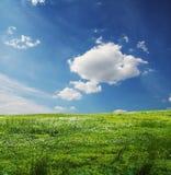 Floresce o prado Imagens de Stock