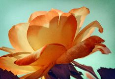 Floresce o verão Fotografia de Stock Royalty Free