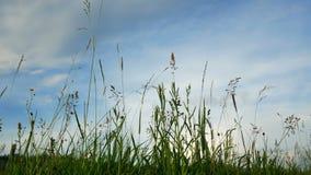 Floresce plantas do céu do por do sol vídeos de arquivo