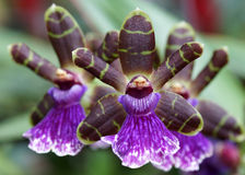 Floresce a profundidade da orquídea de campo rasa Imagens de Stock Royalty Free
