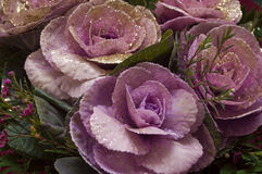 Floresce rosas Fotos de Stock Royalty Free