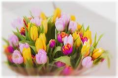 Floresce tulips Ramalhete Ramalhetes coloridos das tulipas Cartão para todas as ocasiões, especialmente mola seletivo Imagens de Stock