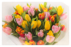 Floresce tulips Ramalhete Ramalhetes coloridos das tulipas Cartão para todas as ocasiões, especialmente mola Vista superior Imagens de Stock Royalty Free