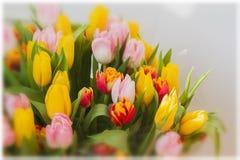 Floresce tulips Ramalhetes coloridos das tulipas Cartão para todas as ocasiões, especialmente mola Foco seletivo para Imagens de Stock Royalty Free