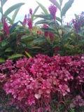 Floresce violetas fotos de stock royalty free