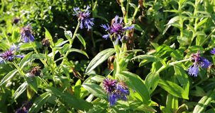Florescendo a vegetação com cores brilhantes no verão filme