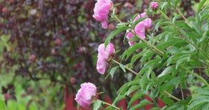 Florescendo a vegetação com cores brilhantes no verão video estoque