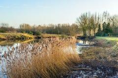 Florescer cobre nos bancos pantanosos de um rio Fotos de Stock