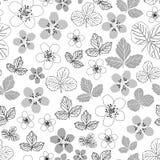 Florescer-flores da amora preta no teste padrão sem emenda da repetição da flor ilustração do vetor