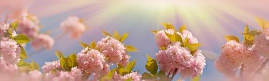 Florescido & x28; flowering& x29; ramo animador japonês bonito imagens de stock
