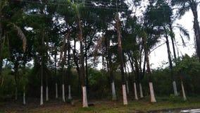 Florest Fotografia de Stock Royalty Free