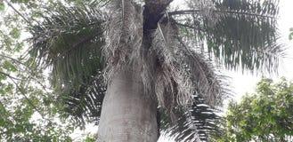 Florest auf Aldeias-Stadt, Innenraum von pernambuco, Brasilien stockfoto