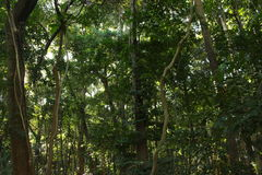 Florest em Brasil Fotos de Stock