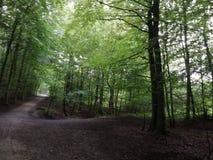 Florest enchanté image stock