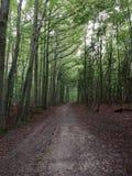 Florest enchanté images libres de droits