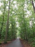 Florest enchanté photographie stock libre de droits