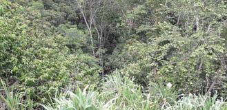 Florest sur la ville d'Aldeias, intérieur de pernambuco, Brésil images libres de droits