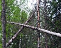 Floresta, árvore, natureza, árvores, pinho, floresta, paisagem, vidoeiro, verão, verde, tronco, outono, parque, mola, grama, folh imagens de stock royalty free