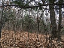 Floresta, árvores Natureza do outono Fotos de Stock Royalty Free