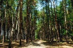 A floresta é um dia brilhante Fotos de Stock Royalty Free
