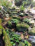 Floresta úmida imagens de stock royalty free