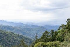 Floresta úmida Foto de Stock
