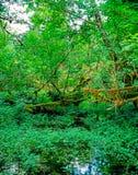 Floresta úmida fotografia de stock royalty free