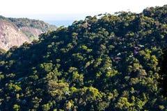 Floresta úmida atlântica Tijuca Forest National Park, Rio de janeiro, Brasil fotografia de stock