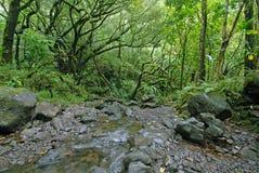 Floresta úmida com córrego, Maui, Havaí Fotos de Stock
