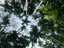 Floresta úmida da natureza da floresta da árvore imagens de stock royalty free