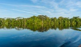 Floresta úmida das Amazonas Fotografia de Stock