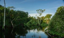 Floresta úmida das Amazonas Imagens de Stock Royalty Free