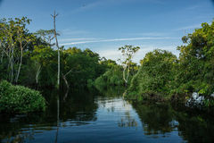 Floresta úmida das Amazonas Foto de Stock