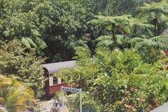 Floresta úmida de Daintree Imagens de Stock