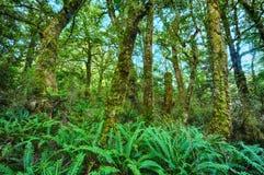 Floresta úmida de Nova Zelândia Foto de Stock