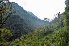 A floresta úmida densa de montanhas de Rwenzori, Uganda imagens de stock royalty free