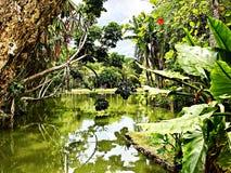 Floresta úmida e um Green River, Mauritius Island imagem de stock