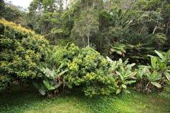 Floresta úmida em Madagáscar, província de Andasibe Toamasina Fotografia de Stock