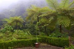 Floresta úmida em Madeira, Portugal fotos de stock