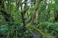 Floresta úmida em Taranaki, ilha norte, Nova Zelândia Fotografia de Stock Royalty Free