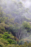 Floresta úmida enevoada de Papuásia-Nova Guiné Fotos de Stock Royalty Free