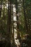 Floresta úmida na ilha de Vancôver, BC, Canadá Fotos de Stock