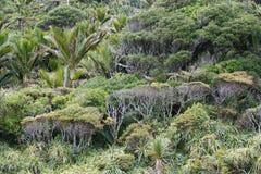 Floresta úmida na trilha do rio de Pororai perto de Punakaiki na costa oeste, Nova Zelândia foto de stock royalty free