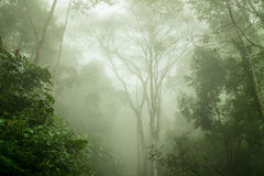 Floresta úmida nevoenta na névoa, foco macio foto de stock royalty free