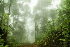 Floresta úmida nevoenta na névoa, foco macio imagens de stock