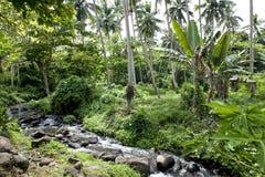 Floresta úmida no cozinheiro Islands Imagens de Stock Royalty Free