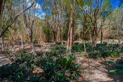 A floresta úmida no dia ensolarado Foto de Stock