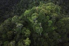 Floresta úmida Pristine Foto de Stock Royalty Free